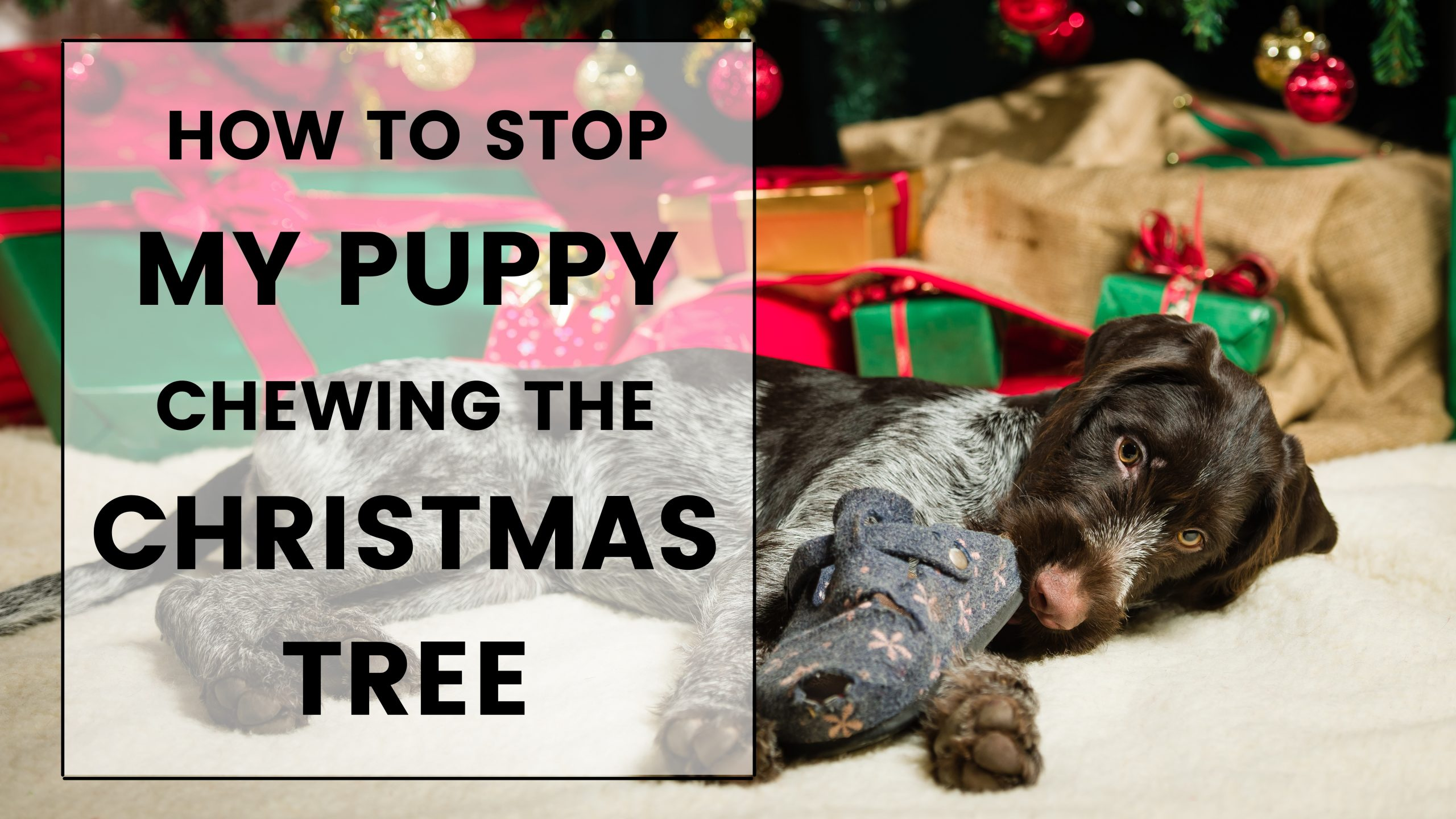 how to stop puppy chewing christmas tree